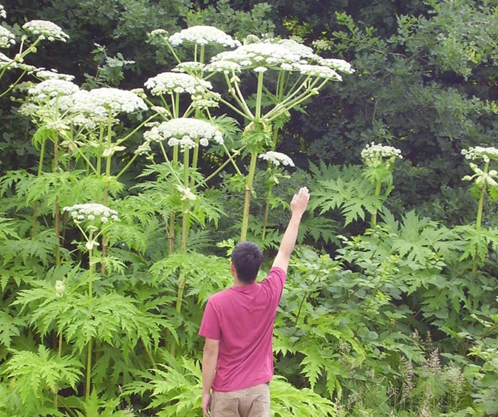 uk's dangerous plants