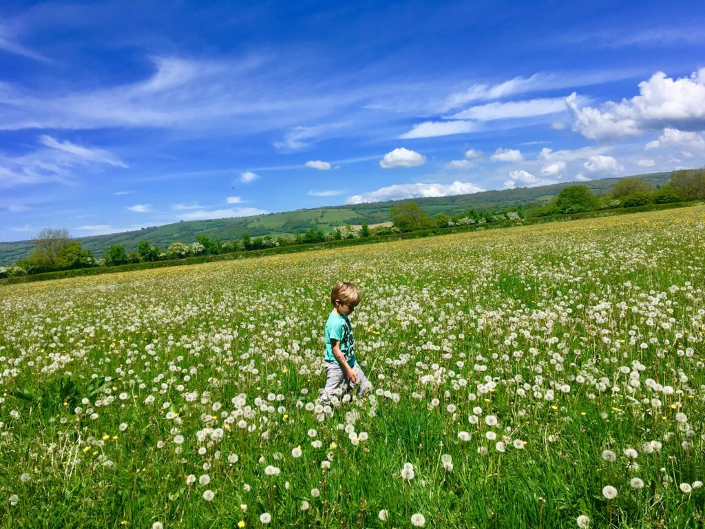 wild meadows in Somerset