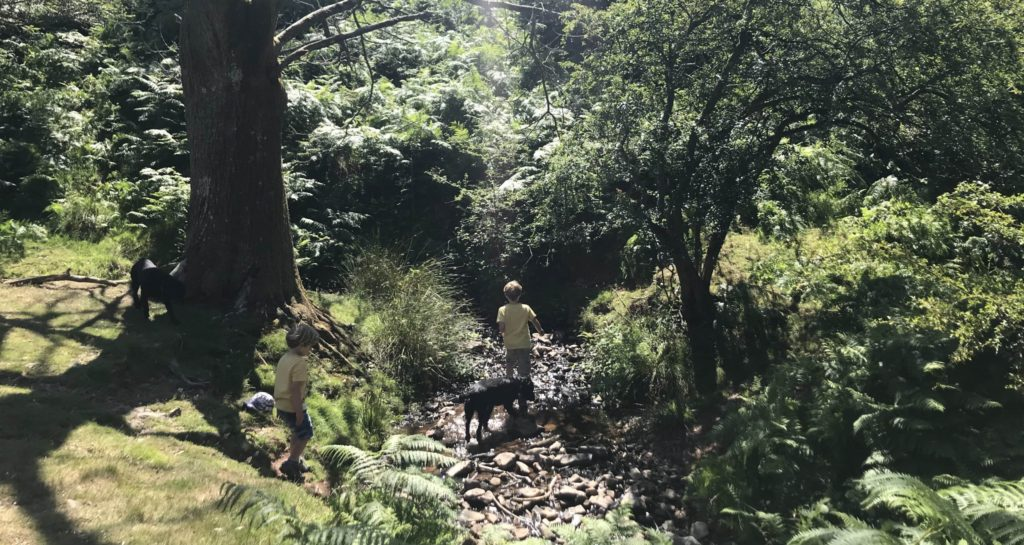 stream walks