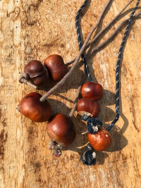 conkers ready