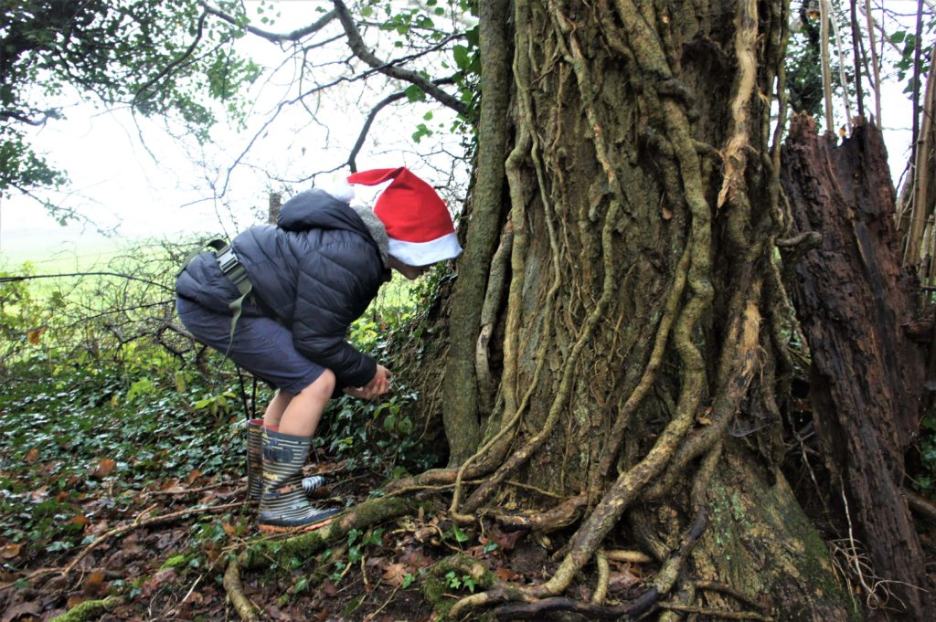 looking for elves