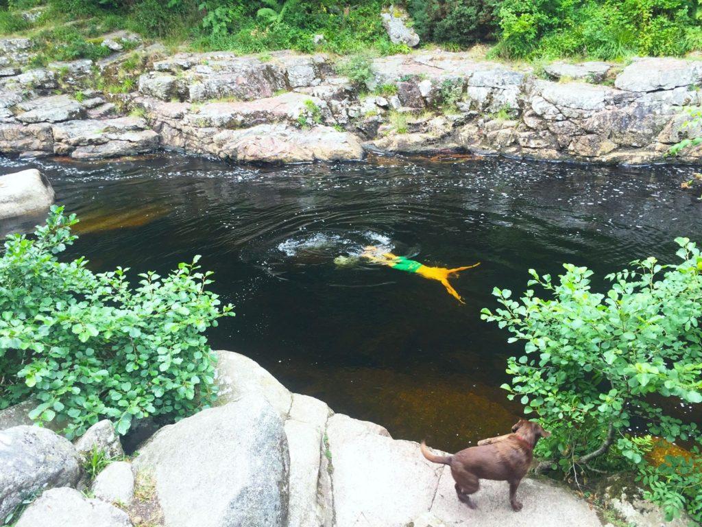 wild swimming devon